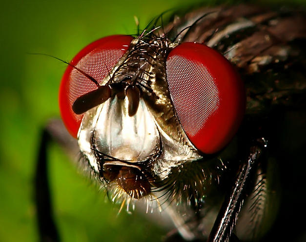 35 Insect Eye Macro Photography That Can Leave You Breathless ...