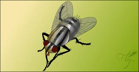 Free Fly Vector 