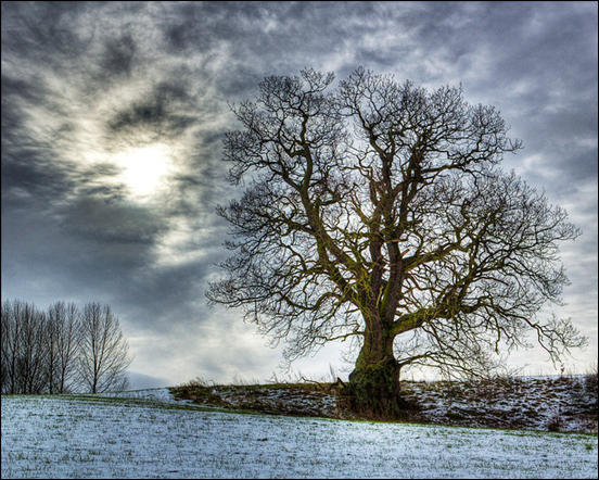 Dramatic winter tree by Tim Engstrom