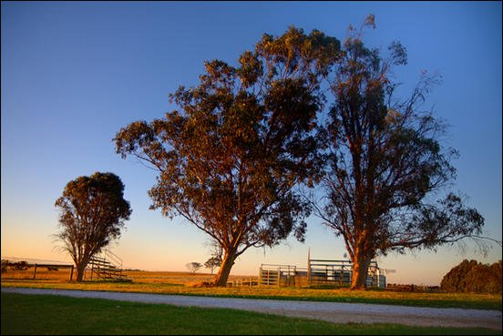 Beautiful trees around the cattle auction yards by Ryk Neethling