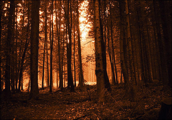 Forest Light by Anton Raath