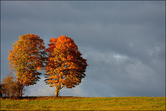 Trees in a field by Martin Cathrae
