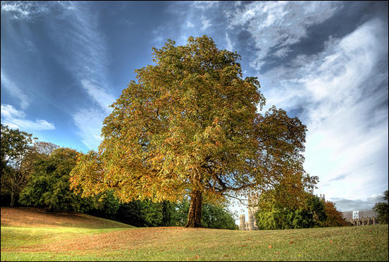 Tree in HDR by Simon Pittock