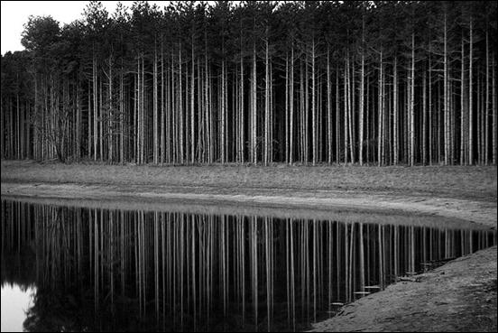 Reflected Pine Trees by Fellowship of the Rich
