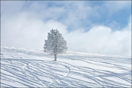 Lone tree in the winter by Zach Dischner