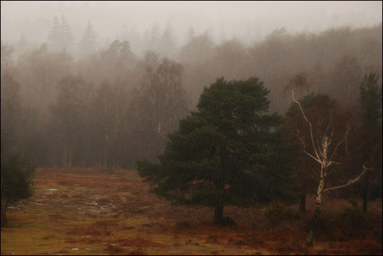 New Forest, Old Rain by Ravages