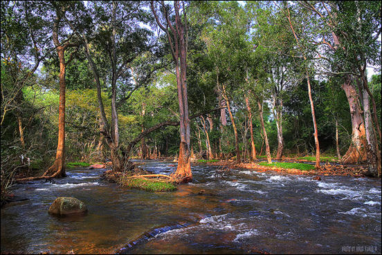 River at chinnar forest by Vinod Kumar M.