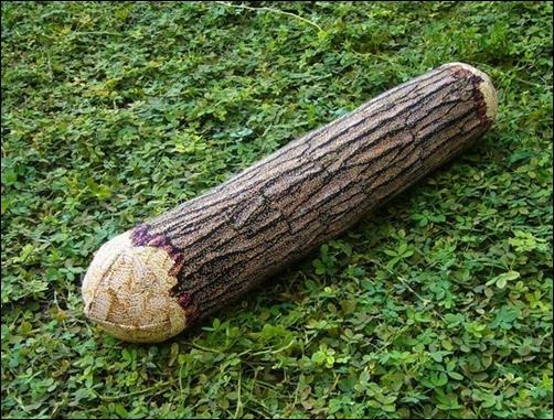 Log-Pillow[3]