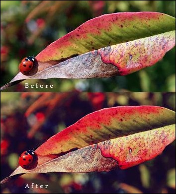 Photoshop-action--nature-colors