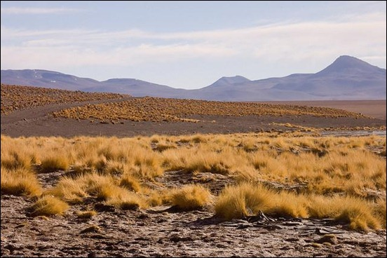 bolivian-altiplano