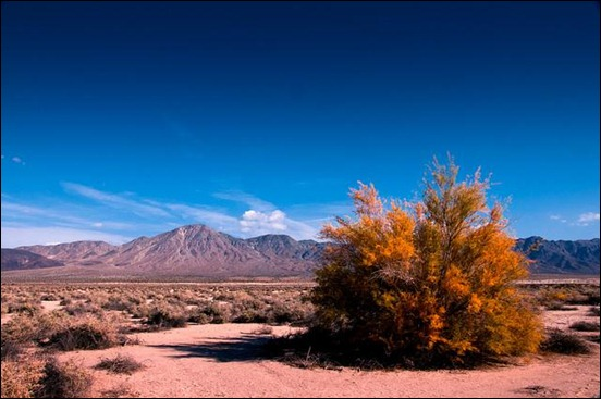 fall-in-the-desert