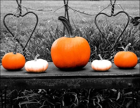 pumpkins-in-a-row