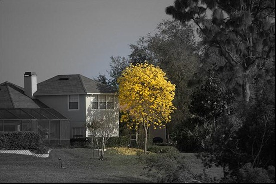 selective-color-photography