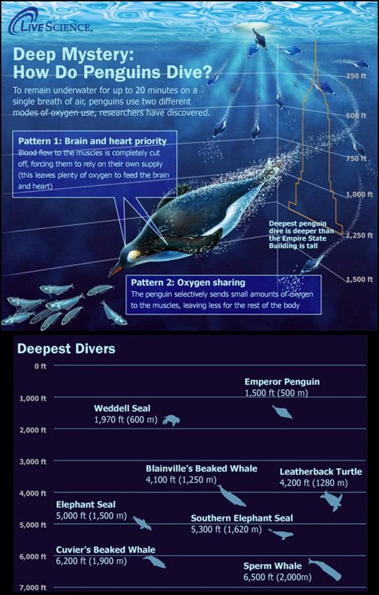 the-ocean's-deepest-divers[7]