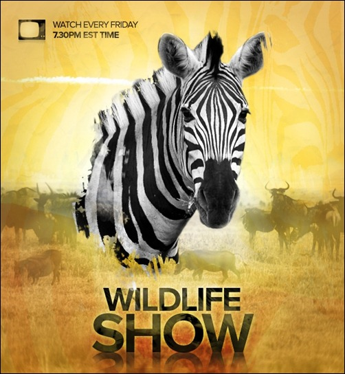 design-a-wildlife-tv-show-poster