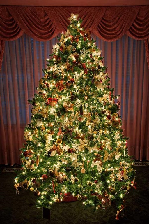24 beautiful christmas tree pictures creative Large decorated christmas trees