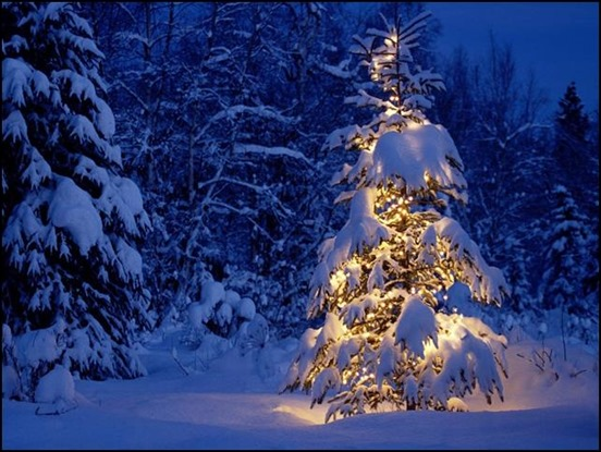 snow-covered-christmas-tree[3]