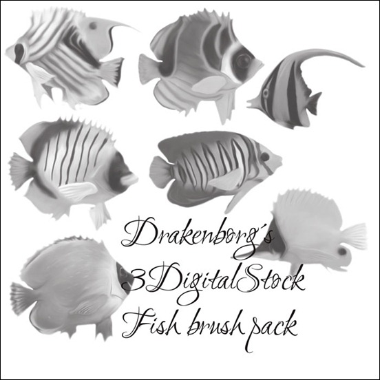 drakenborg's-fish-brushes