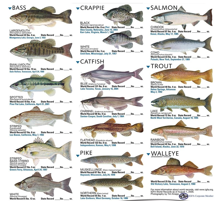 Freshwater fish for All fish names