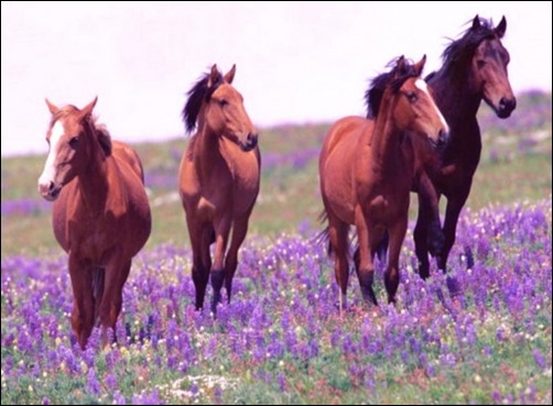 spring wild horse wallpaper - photo #30