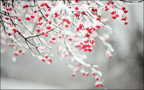 25 Amazing Chilly Winter Wallpapers Creative Cancreative Can