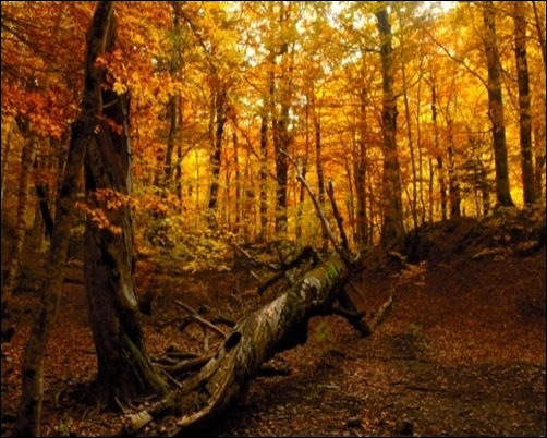 Autumn-Forest-forest-background