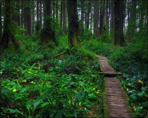 Beautiful-Forest-Path-dark-forest-wallpaper