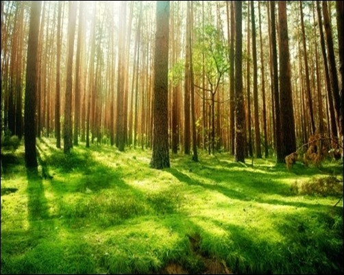 Beautiful-Forest-Scenery-forest-wallpaper