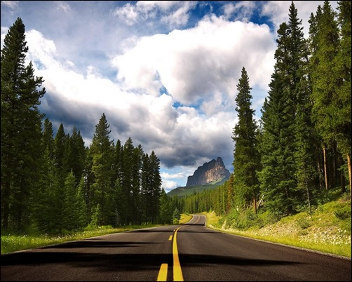 Road-and-Forest-Background-forest-wallpaper