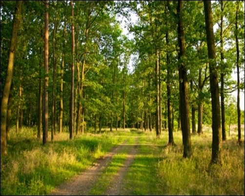 Summer-Forest-forest-background-pictures
