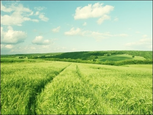 Summer-Green-Wheat-Field-summer-wallpaper