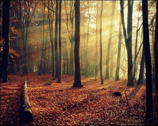Sunlight-Through-Forest-forest-background-pictures