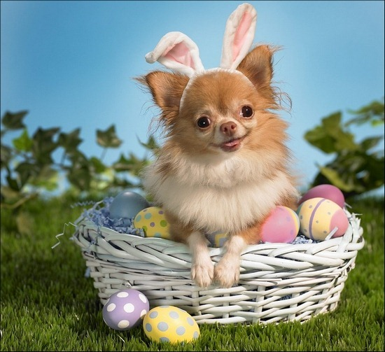 bunny-wishes-you-a-happy-easter