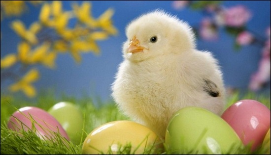 cute-easter-chick-with-eggs
