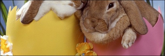 easter-bunny-wallpapers