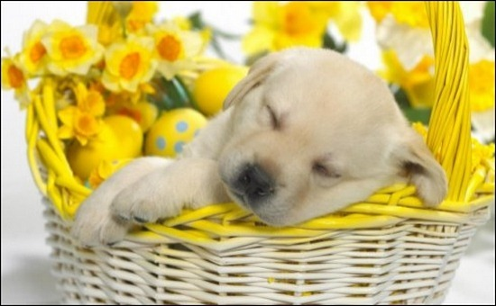 easter-puppy-basket