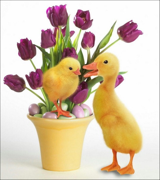 easter-quakers