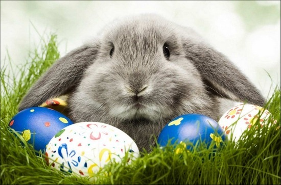 easter-rabbit-in-grass