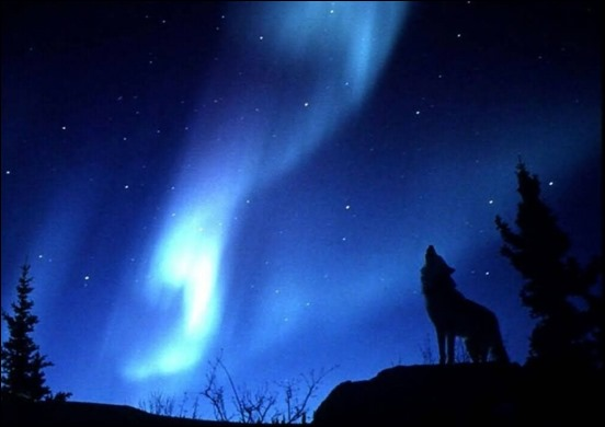 evening-howl-blue-moon