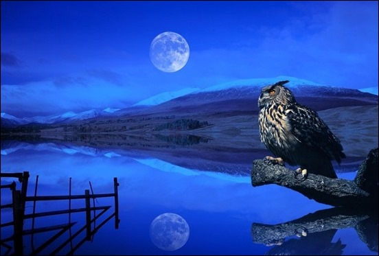 new-moon-eagle-owl