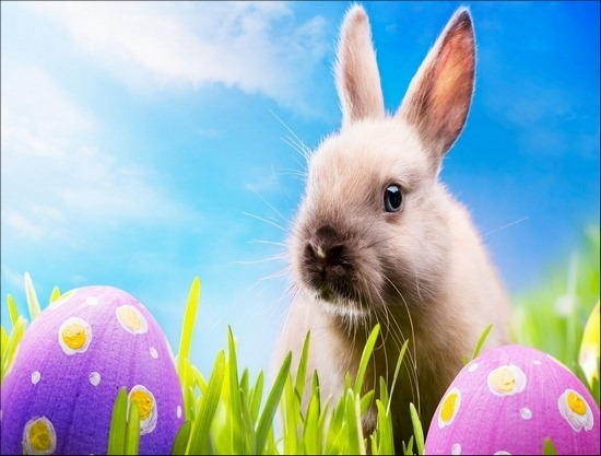 rabbit-and-easter-eggs