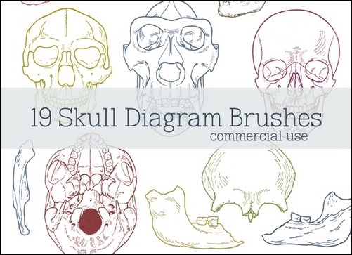 skull-diagram-brushes