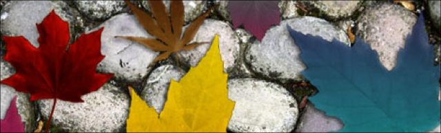 Autumn-Brushes–Maple-Leaf