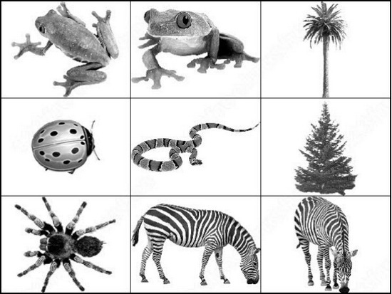 animal-brushes[13]