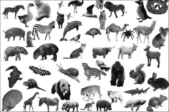 animal-brushes[5]