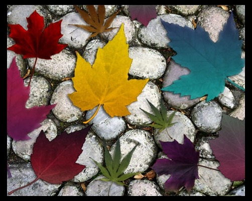 autumn-brushes-maple-leaf