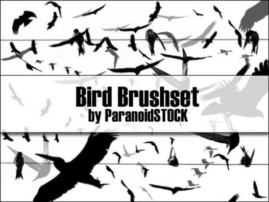bird-brushes