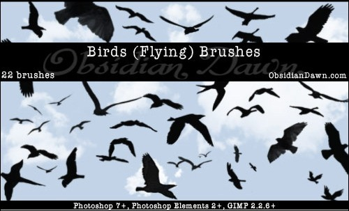 bird-flying-brushes