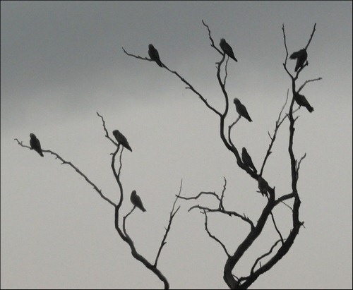 branches-and-birds-brushes
