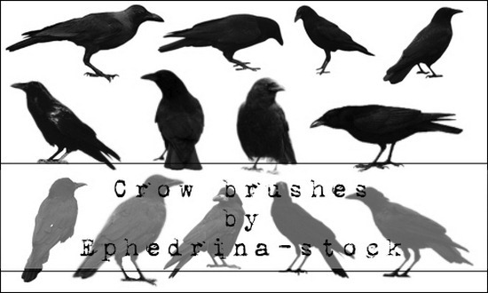 crow-brushes[3]